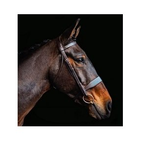 Cameo Equine Core Collection Hunt Bridle