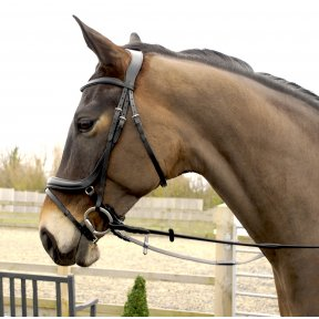 Rhinegold Anatomical Flash Bridle